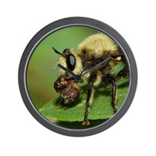 Robber Fly with Lunch Wall Clock
