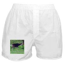 okapi Boxer Shorts