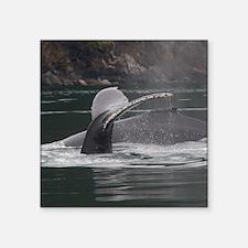 "whales Square Sticker 3"" x 3"""