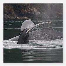 "whales Square Car Magnet 3"" x 3"""