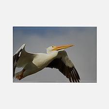 White Pelican Departure Rectangle Magnet
