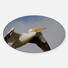 White Pelican Departure Decal