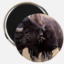 bison friendship Magnet