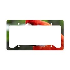 Scarlet Macaw License Plate Holder