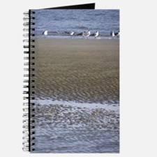 Sea Gulls in a Sound Journal