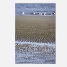Sea Gulls in a Sound Postcards (Package of 8)