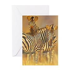 Plains Zebra Greeting Cards