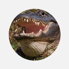 """alligator with teeth showing 3.5"""" Button"""
