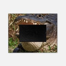 alligator with teeth showing Picture Frame