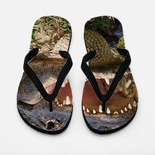 alligator with teeth showing Flip Flops