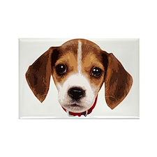 Beagle face 002 Magnets