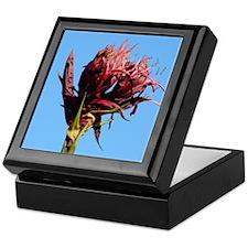 Red Gymea Lily Keepsake Box