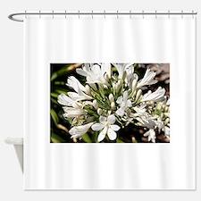 Agapanthus (white) flower in bloom Shower Curtain
