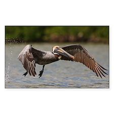 Pelican in Flight Decal