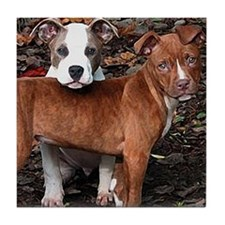 Pit Bull Terriers Tile Coaster
