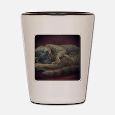 sleepy kitty Shot Glass