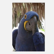 Hyacinth Macaw Postcards (Package of 8)