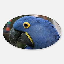 Hyacinth Macaw Decal