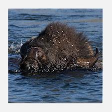 bison swimming Tile Coaster