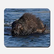 bison swimming Mousepad