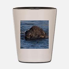 bison swimming Shot Glass