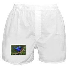 Blue Wren Boxer Shorts