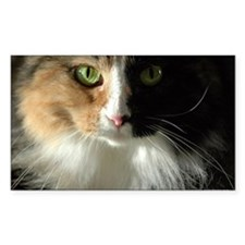 The Cat's Eyes Rectangle Decal