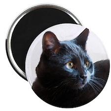 Black Cat Beauty Magnet
