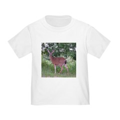 Doe in the Shade T