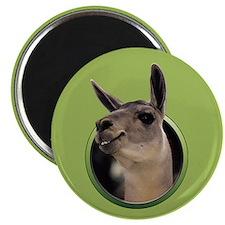 Smiling Llama Magnet