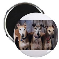 Greyhounds Three Magnet