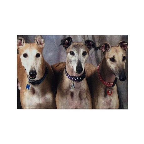 Greyhounds Three Rectangle Magnet (10 pack)