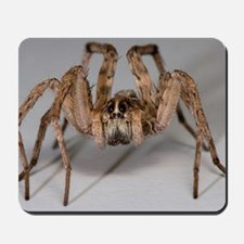 Wolf Spider Mousepad