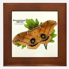 Polyphemus Moth Framed Tile