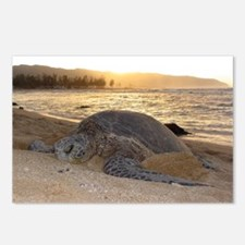 Honu at Sunset Postcards (Package of 8)