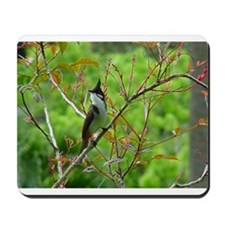 Red Whiskered Bulbul Mousepad