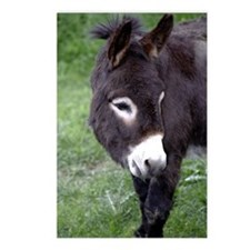 Black Donkey Postcards (Package of 8)