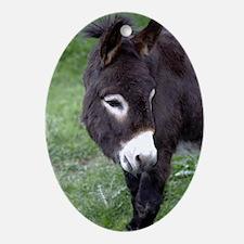 Black Donkey Oval Ornament