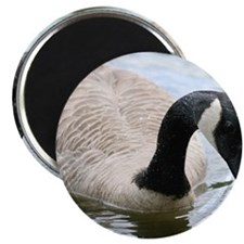 Canada Goose Magnets