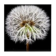 White Dandelion Flower Plant Tile Coaster