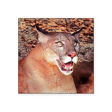 Surprised Cougar Sticker