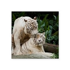 Kiss love peace and joy white tigers lovers - Cop
