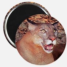 Surprised Cougar Magnets