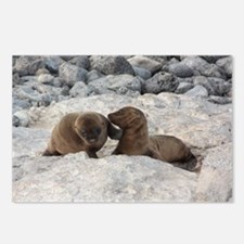 Baby Sea Lions Galapagos Postcards (Package of 8)