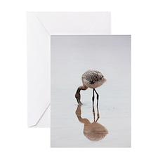 Baby Flamingo Galapagos Greeting Cards
