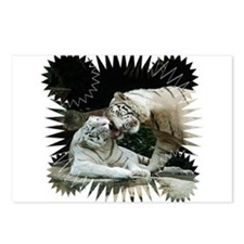 Kiss love and joy White Bengal Tigers 3 Postcards