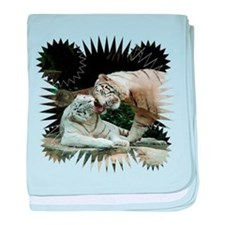 Kiss love and joy White Bengal Tigers 3 baby blank