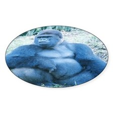 Silverback Gorilla Oval Decal