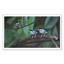 Java Sparrow Decal