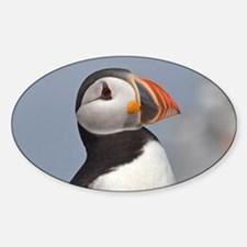 Puffin Decal